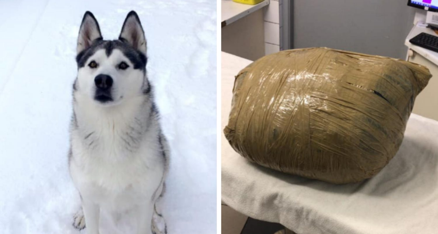 Woman Returns From Vacation To Find Her Dead Dog Wrapped In Tape By Kennel