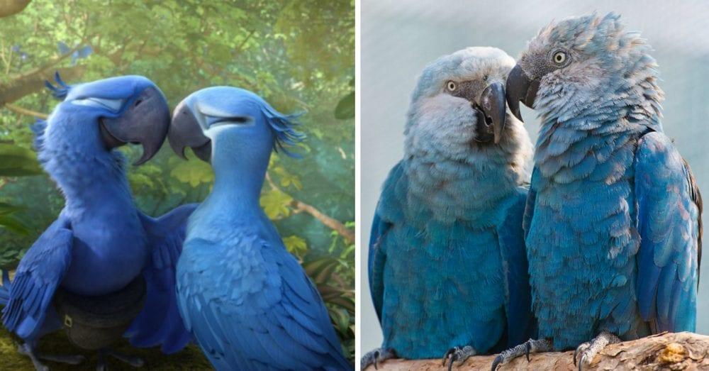 Bluebird From 'rio' Movie Now Extinct In The Wild
