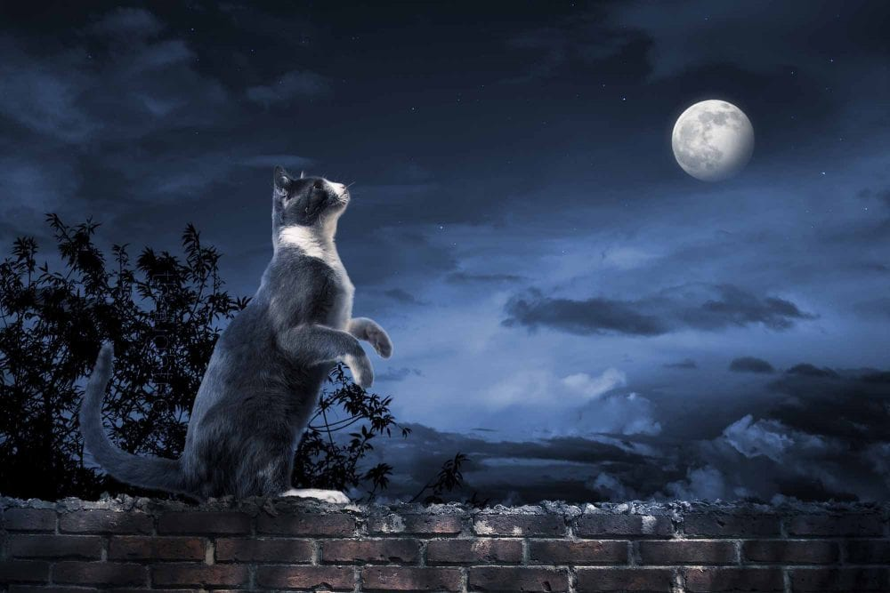 Cats And The Supernatural: Cats Are Considered To Be In Touch With The Spirit Realm
