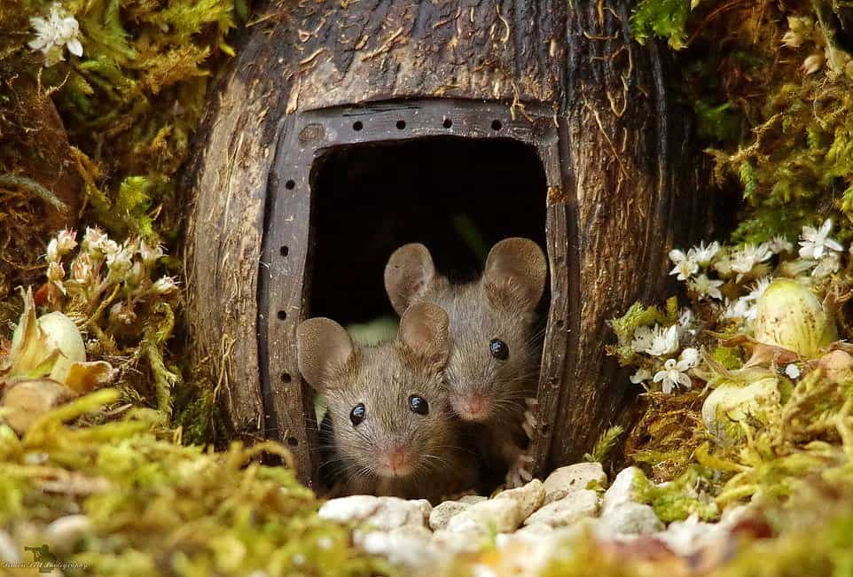 Simon Dell Creates A Tiny Home To Photography New Mice Best Friends