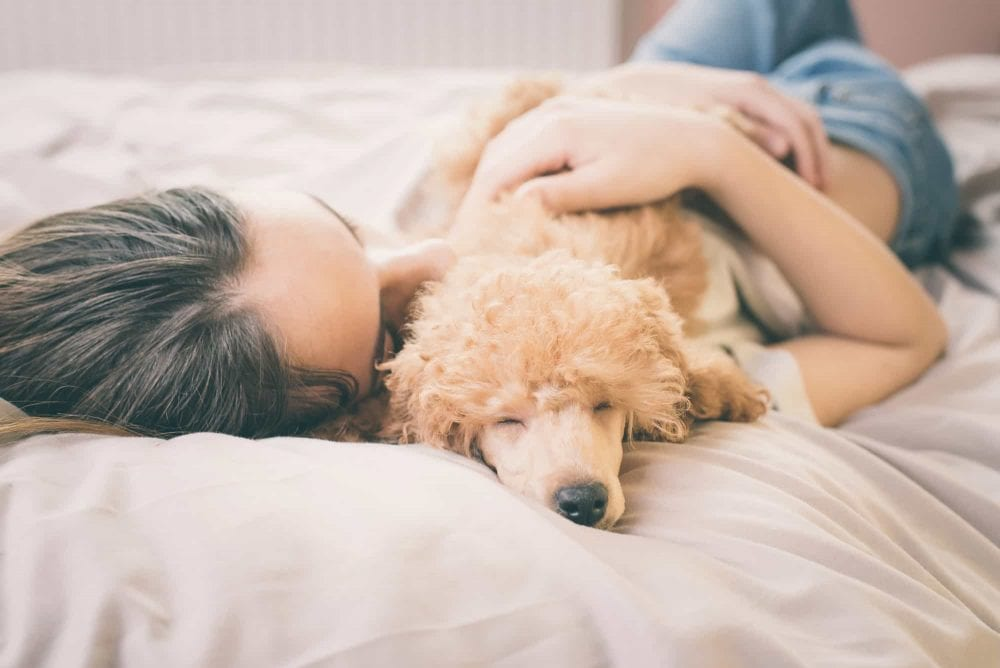 Studies Claim — Sleeping With Your Dog Is Better Than Sleeping With A Guy