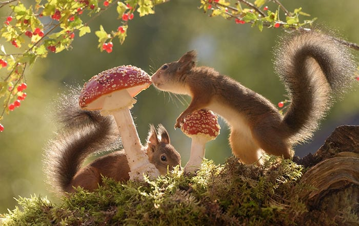 Portraits Of Squirrels Captured Everyday For Six Years By Renowned Photographer