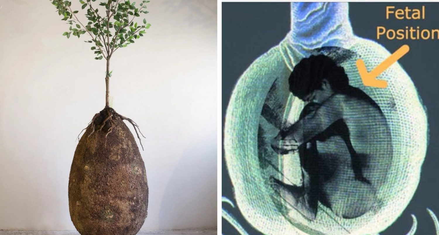 Goodbye Coffins: These Organic Burial Pods Will Turn You Into A Tree When You Die