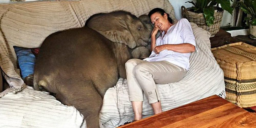 Baby Elephant Follows Woman Everywhere After She Saved Her From Death
