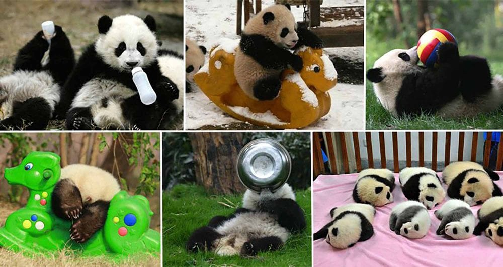 Panda Day Care: The Best Thing You Will See This Week