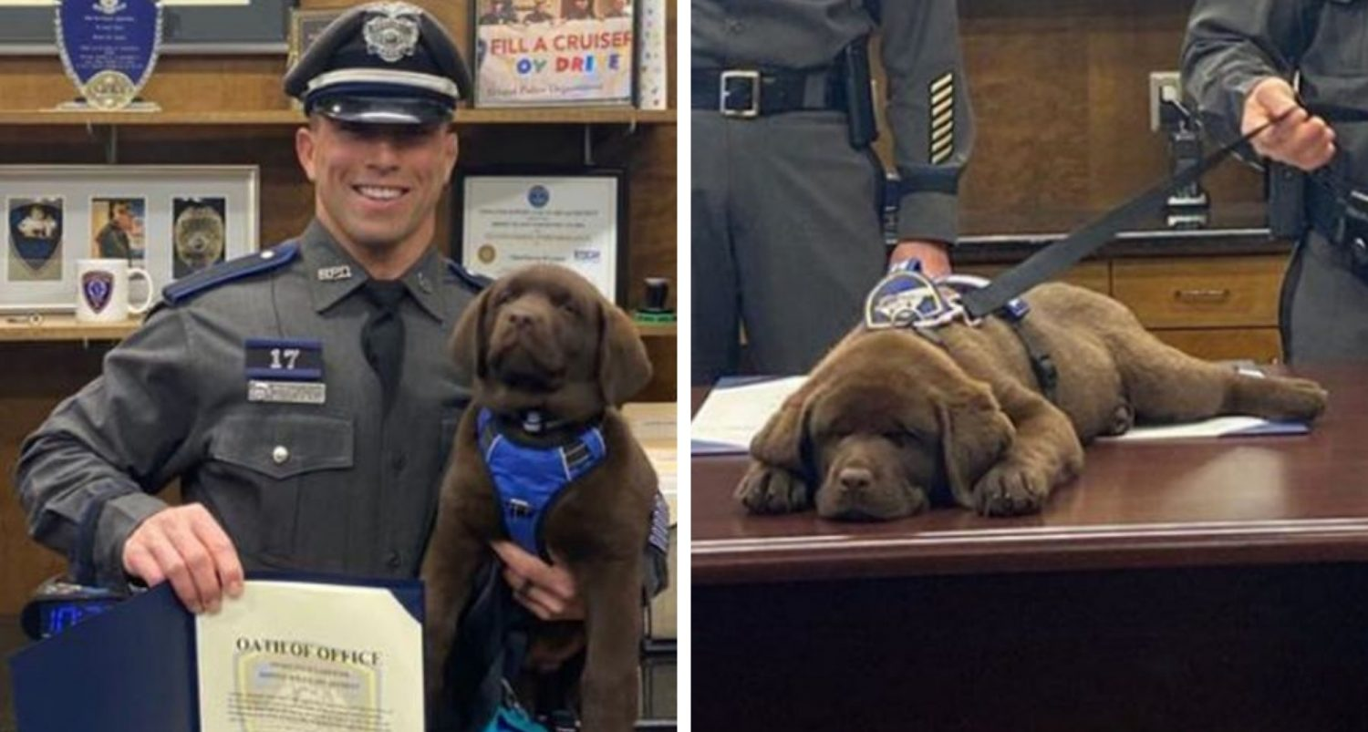 Police Dog Sleeps Through His Entire Swearing-in-service