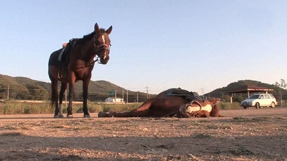 Horse Acts Like He's Dead Every Time Someone Attempts To Ride Him