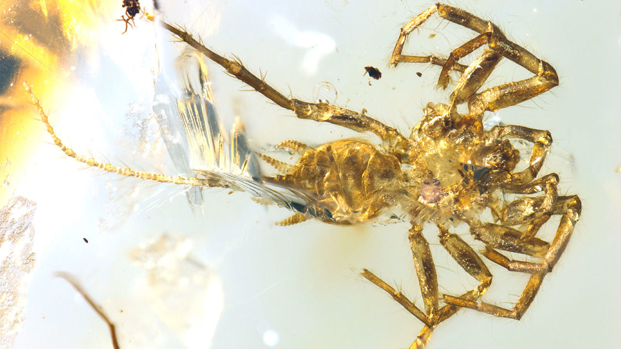 100-million-year-old 'spider' with a scorpions tail found in amber