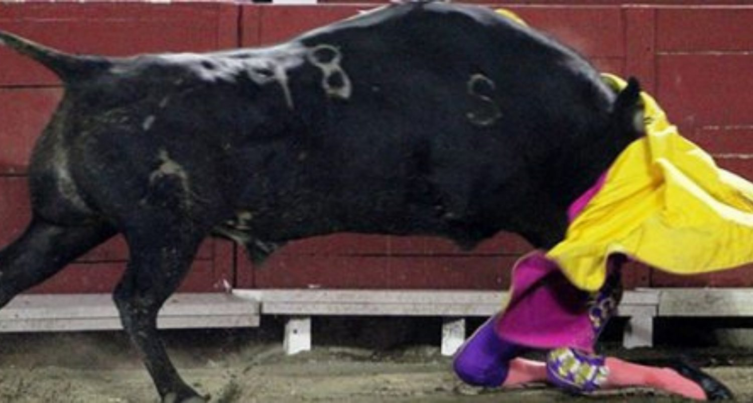 Bullfighter Gored In Face After Bull Knocks Her To Ground