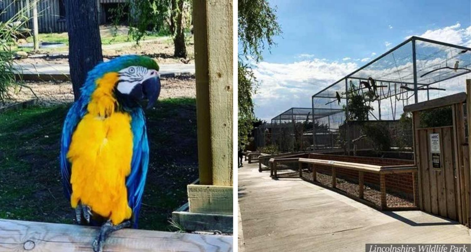 Parrots Removed From Uk Wildlife Park After They Started Swearing At Customers