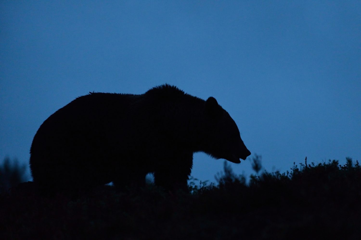 Bear Sneaks Up On A Group Of Calm Hikers