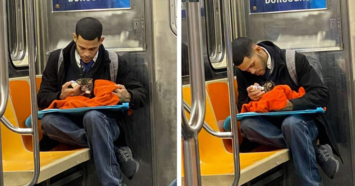 man spotted with tiny kitten on subway is restoring people's faith in humanity