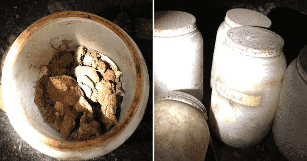 gallon-sized jars of human remains including infant and tongues discovered in florida crawlspace