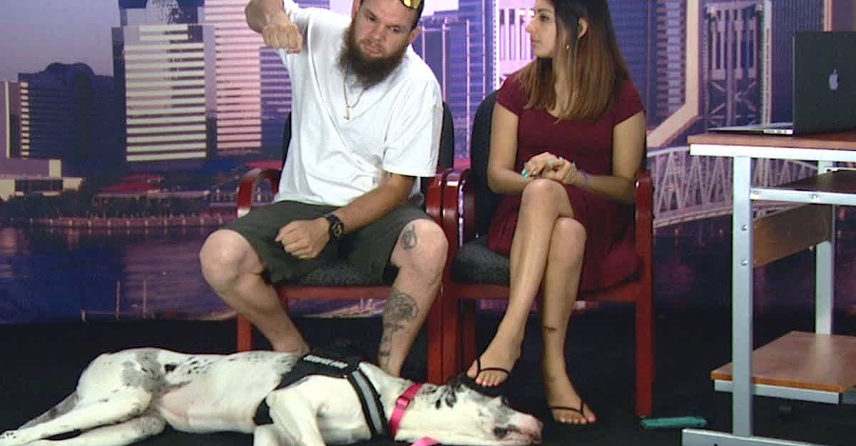 deaf couple enraged after one passenger punched pregnant fiancée and service dog who apparently took too much space