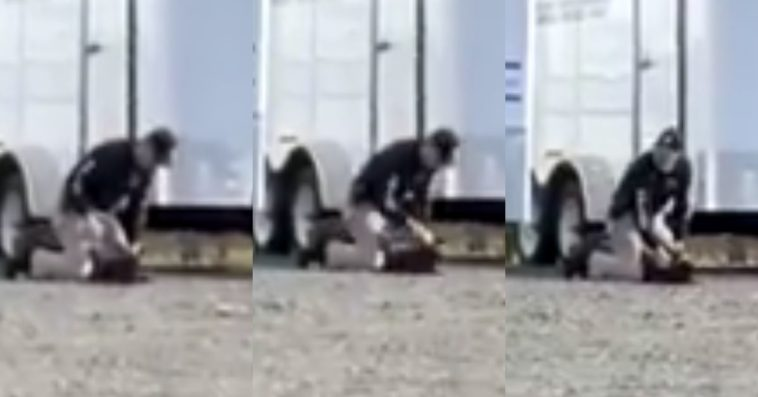 video shows trainee k9 being repeatedly punched by vacaville police office