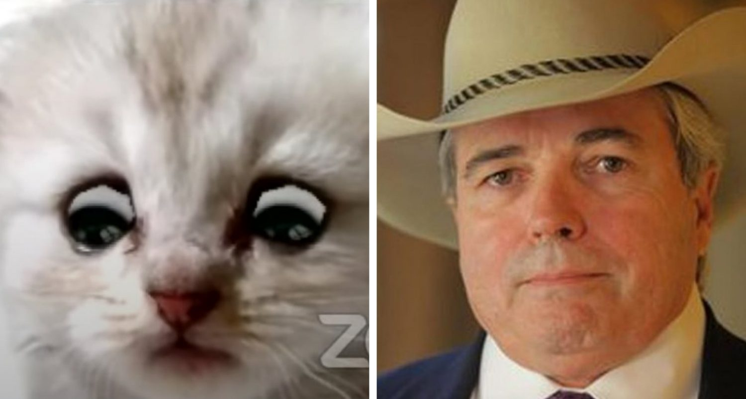 Texas Lawyer, Trapped By Cat Filter On Zoom Call, Informs Judge He Is Not A Cat