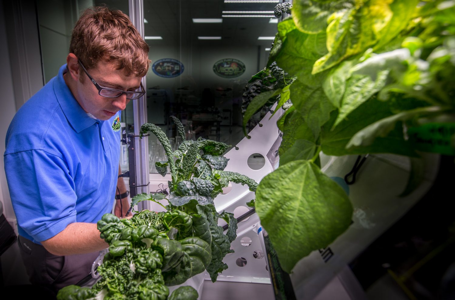 astronauts grow salad greens, eat fresh food in space, a nasa first