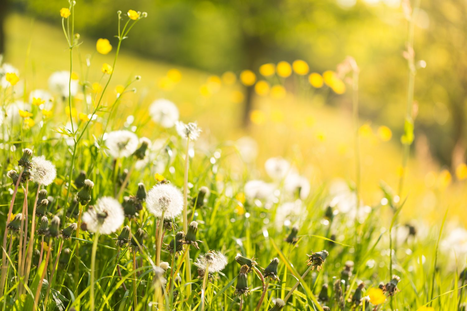 tips for preparing for allergy season