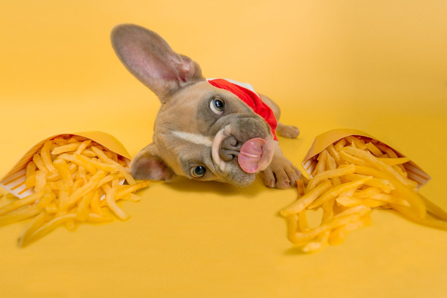 can dogs eat carrots and other food dilemmas