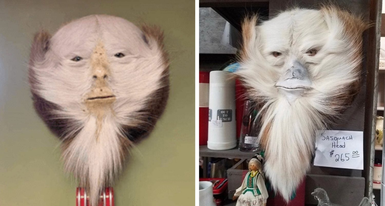 Taxidermists Are Turning Deer Butts Into Sasquatch Heads And I Can't Stop Laughing