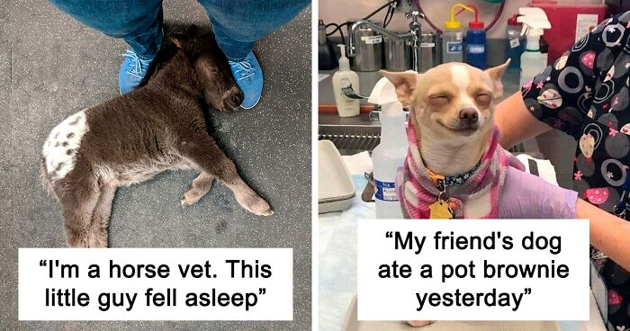 50 times vets encountered the cutest pets at work and just had to take a picture