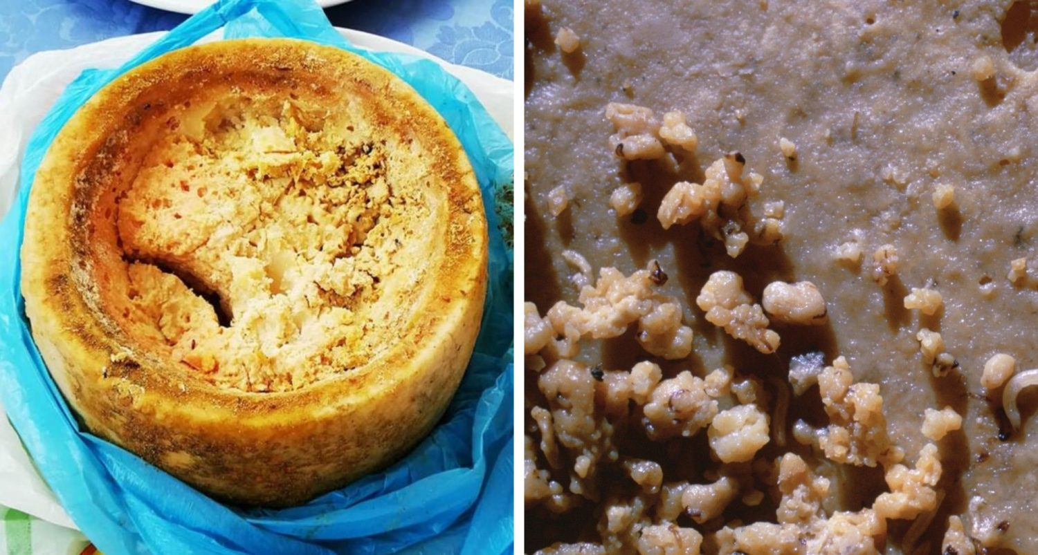 Casu Marzu, The Illegal Cheese: All Your Questions Answered