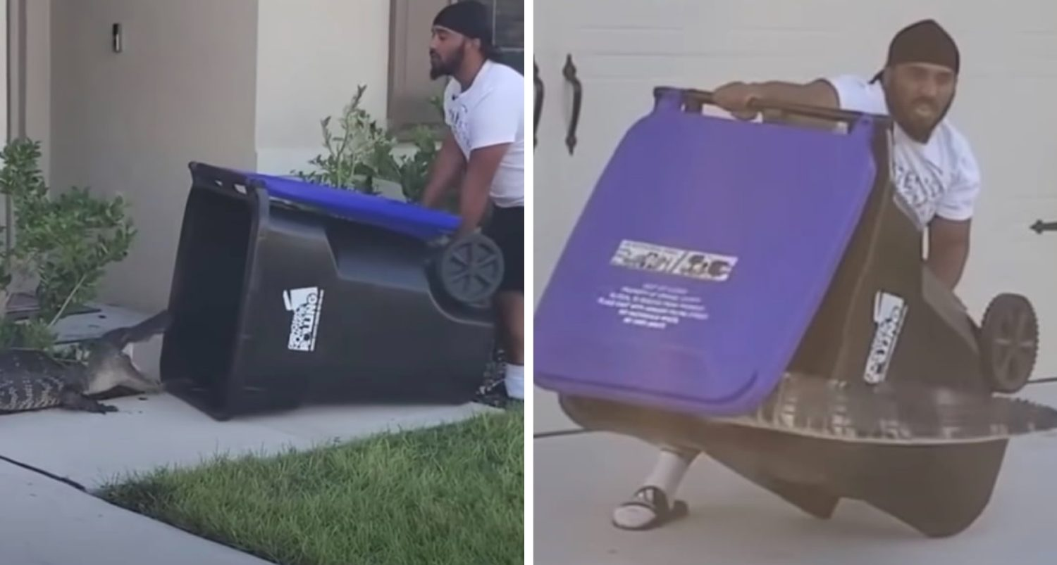 Florida Man Catches Alligator With Trash Can And Releases It Back To Water