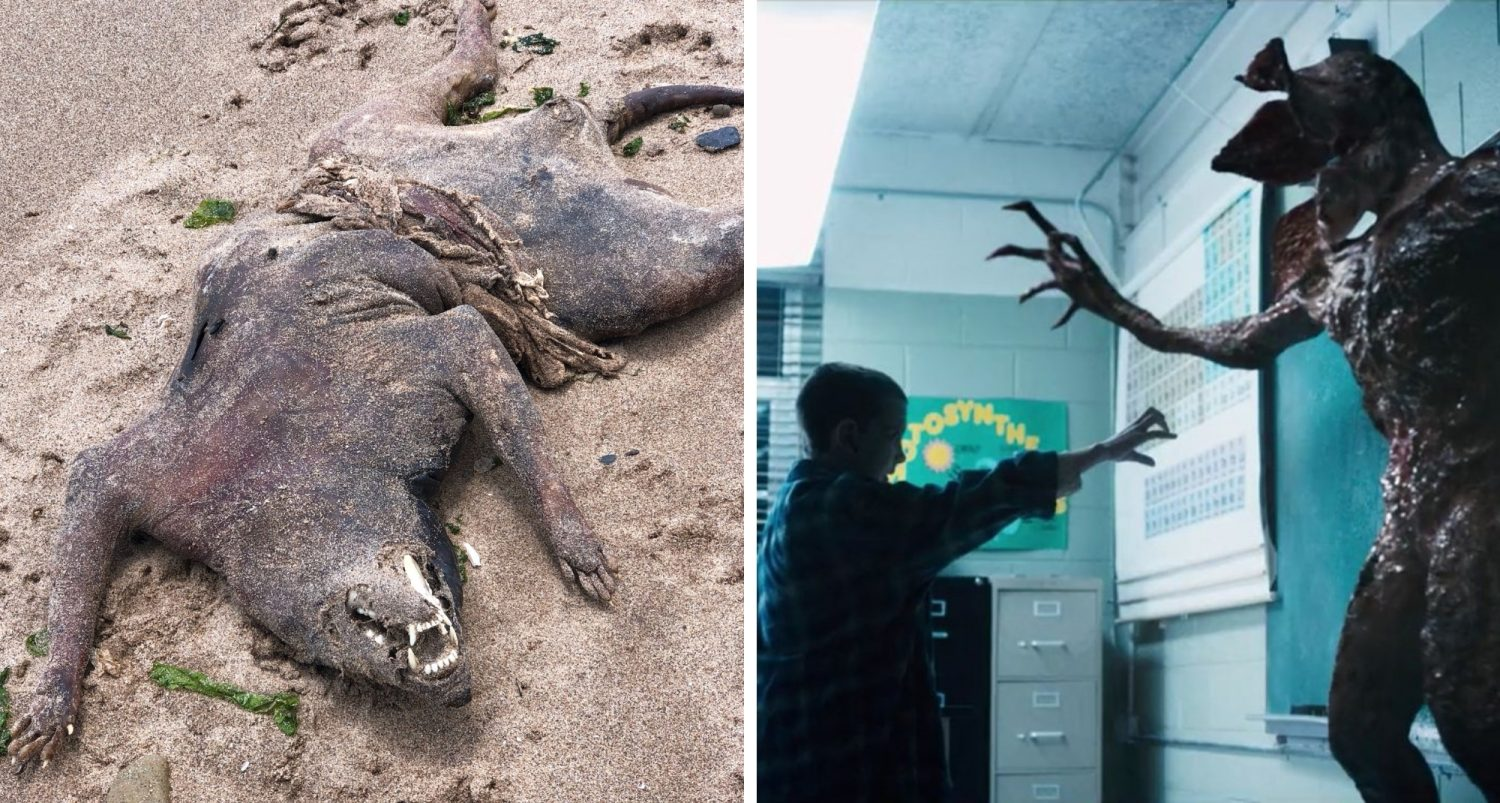 The Mystery Of The Montauk Monster: The Morbid Carcass With An Unknown Origin
