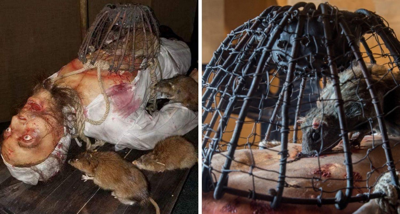 Rat Torture Method: Is This The Worst Way To Die?