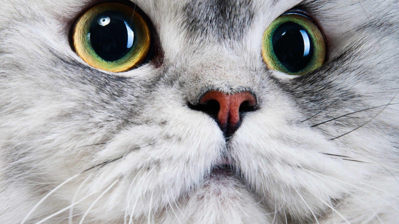 The Fascinating Science Behind How Cat Eyes Work